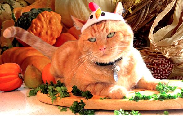 cat-served-up-for-thanksgiving-dinner